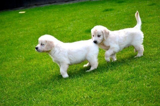 Pets For Sale in Coimbatore India