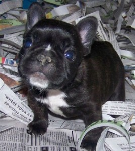 Coimbatore Pets For Sale in India Classifieds Free Ads