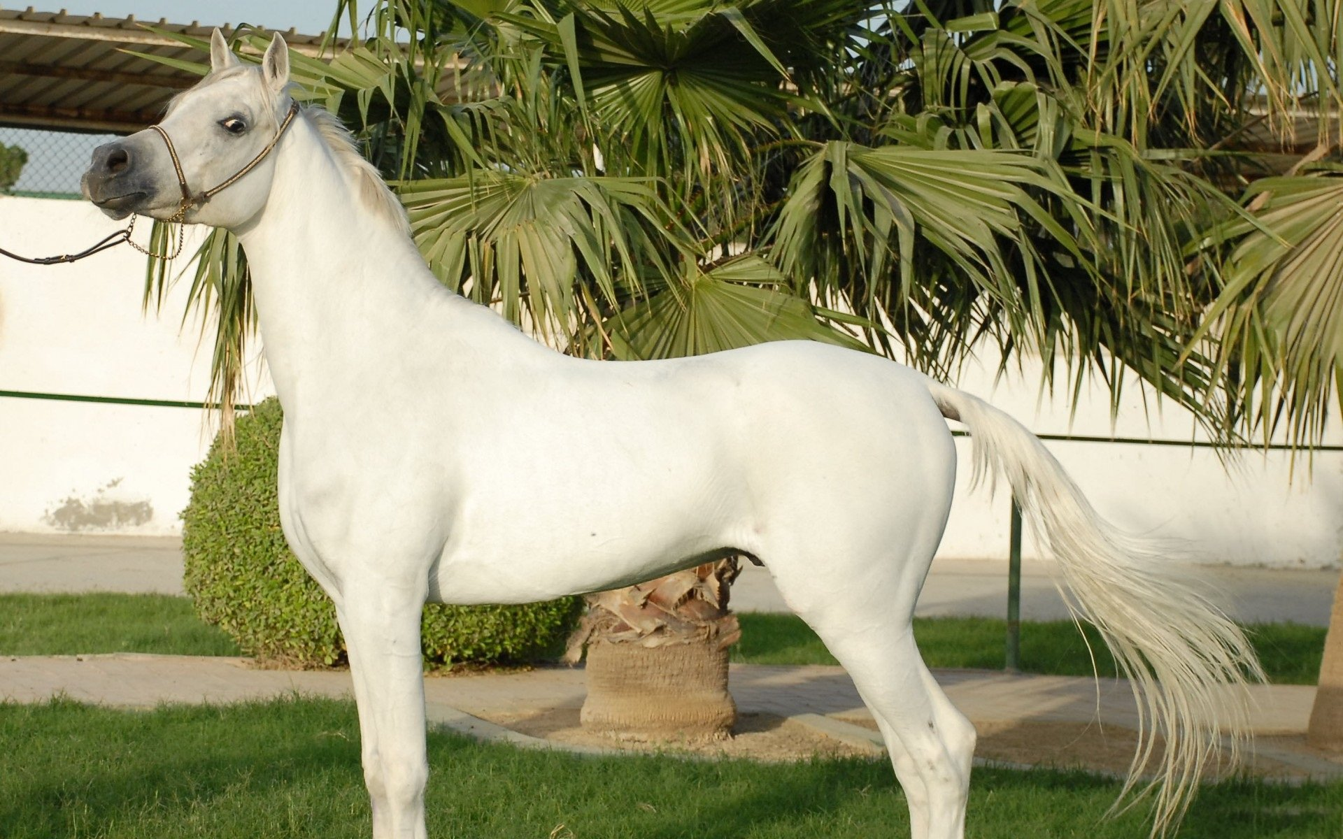 Horses For Sale Adoption in Islamabad Pakistan Classifieds