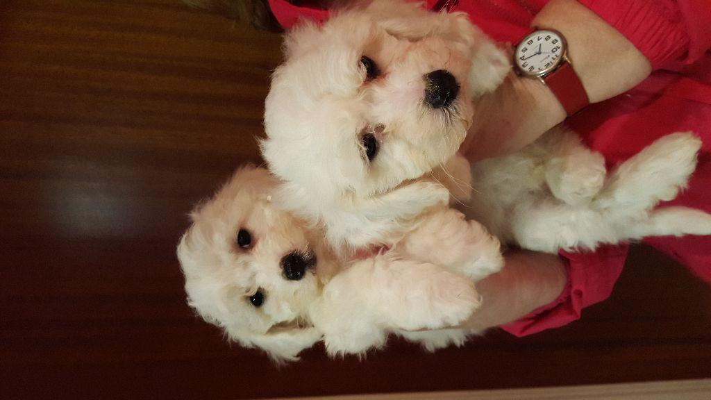 San Antonio Huista Pets For Sale in Guatemala Classifieds